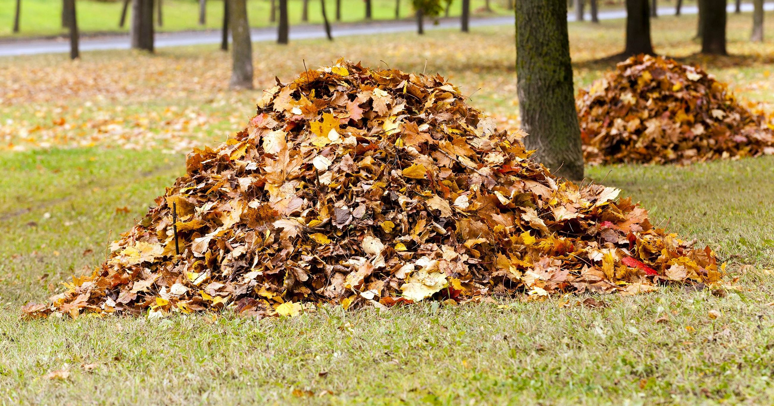 Piles of leaves in field (JPG)